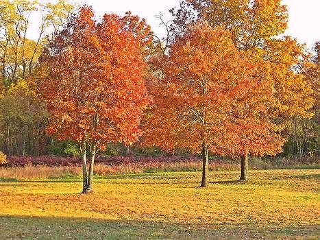 Fall Scene 5 by Dave Dresser