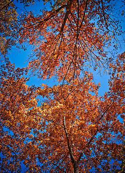 Fall Sky by Charles Fletcher