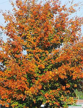 Fall Tennessee Style by Lorraine Louwerse