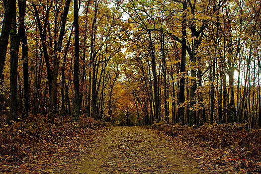 Fall by Timothy J Berndt