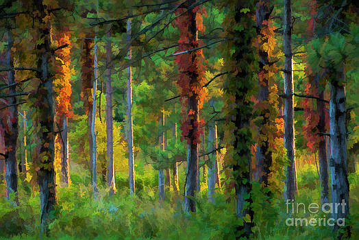 Fall Trees at Sunset by Maria Aiello