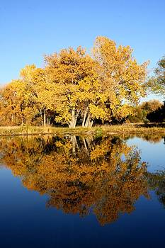 Fall Trees reflecting on the lake by Unknown