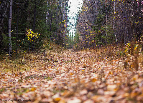 Fall Walk on a leaf path by Darren Langlois