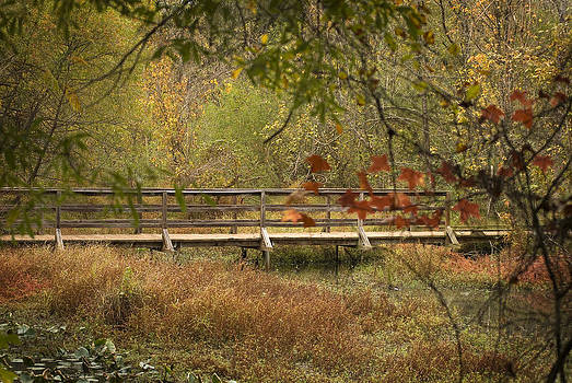 Fall Wetlands by Cindy Rubin