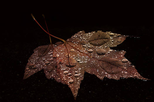 Sandra Sigfusson - Fallen Leaf