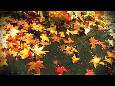 Fallen Leaves by Lee Yang
