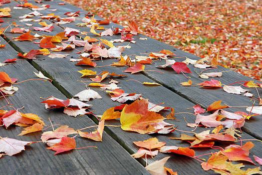 Lisa Phillips - Fallen Leaves