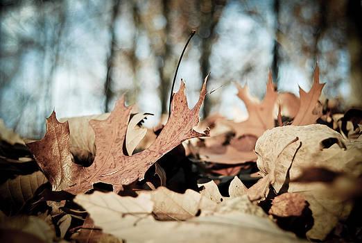 Fallen Leaves by Swift Family