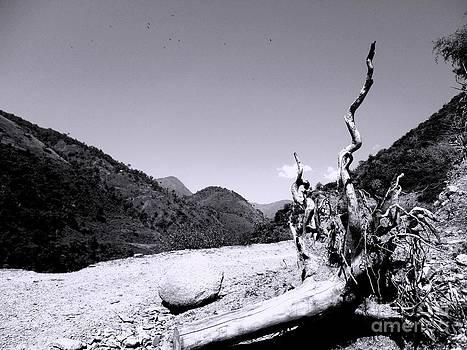 Fallen Tree by Hari Om Prakash