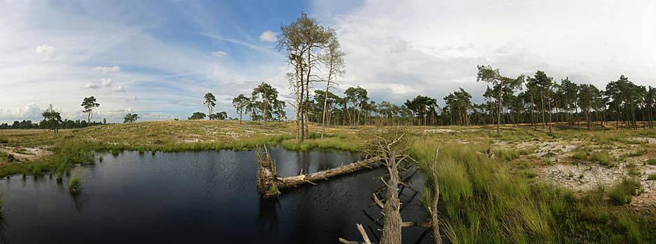 Fallen tree in pond by Erik Tanghe