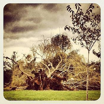 Fallen Tree. #sandy #tree #uprooted by Robyn Montella