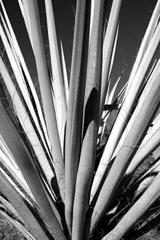 Jason Smith - Falling in Line
