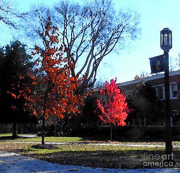 Falling Leaves by Karen Francis