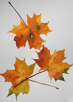 Falling Leaves of Autumn by Jan Lowe