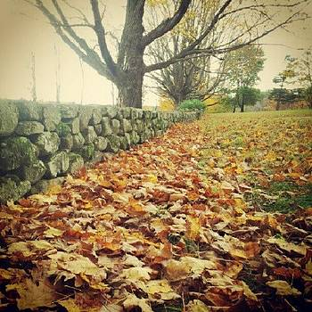 #fallingleaves #fall #farmland by Laura Vaillancourt