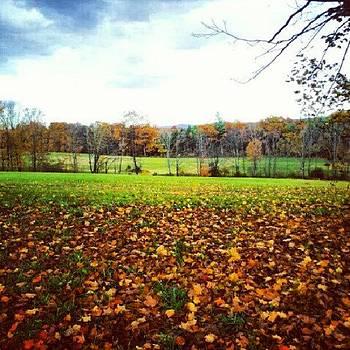 #fallingleaves #fall #seasonchange by Laura Vaillancourt