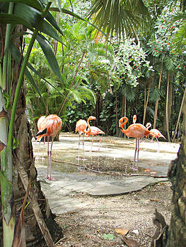 Kimberly Perry - Fancy Flamingos