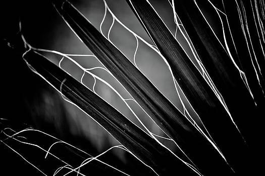 Hakon Soreide - Fanned Leaves