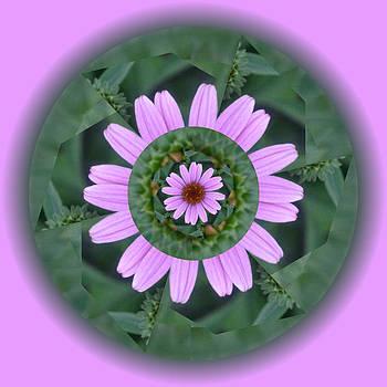 Fantasy Flower by Linda Pope