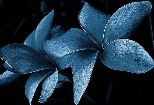 Fantasy Flower by Stephen Chard