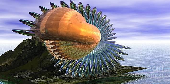 Fantasy Shell by Gabriele Nedilka