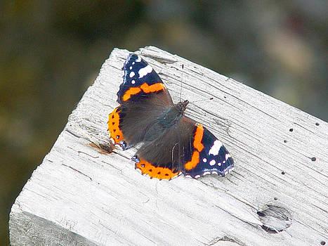 Farfalla by Niki Mastromonaco