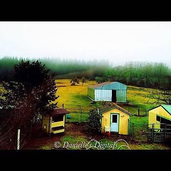Farm by Danielle McNeil