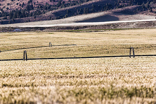 Farm Field in Irwin 2 by Chris Fullmer