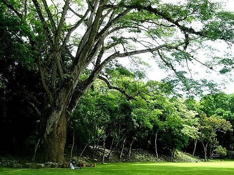 Father Tree 1 by Sara Hamilton
