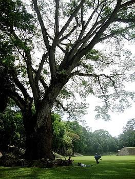 Father Tree 2 by Sara Hamilton
