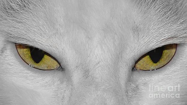 Favorite kitty by Evmeniya Stankova