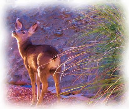 Fawn in Last Light by FeVa  Fotos