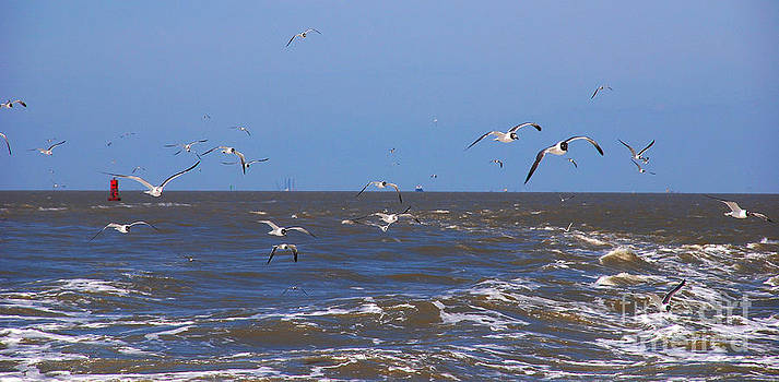 Susanne Van Hulst - Feed us - Ferry to Galveston TX