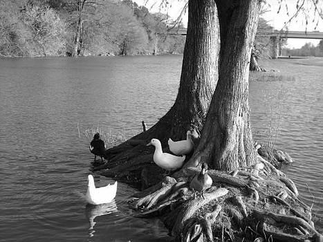 Feeding the Ducks by Michaelle Beasley