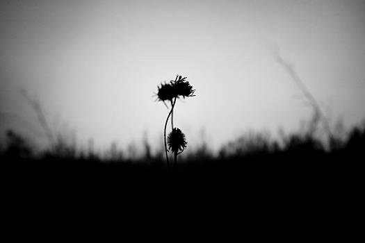 Feel the dark by Daniel Kulinski