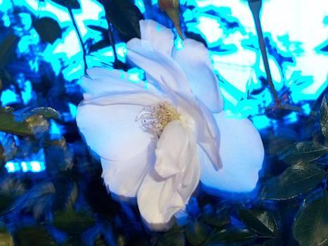 Eleigh Koonce - Feeling Blue Flower