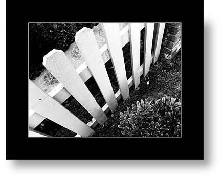 Fence by Attila Csuha