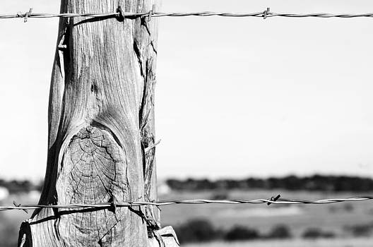 Fence Post by Patrick Dunn
