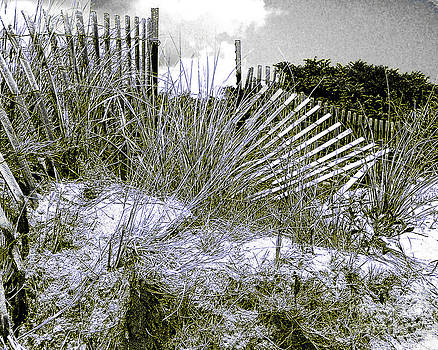 Anne Ferguson - Fences in Duotone