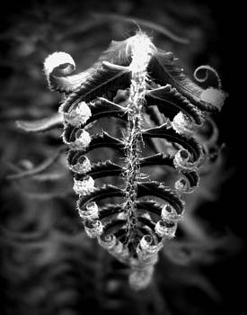 Fern in Black and White by Martha Hughes