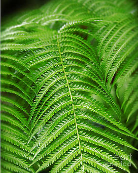 Fern time by David Taylor
