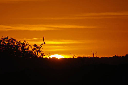 Harvey Barrison - Fernandina Sunset