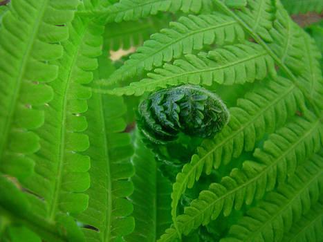 Baslee Troutman - Ferns Fine Art Prints Green Forest Fern