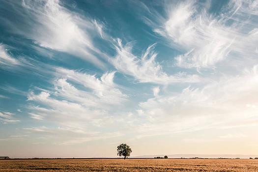 Chris Fullmer - Field Oak 1