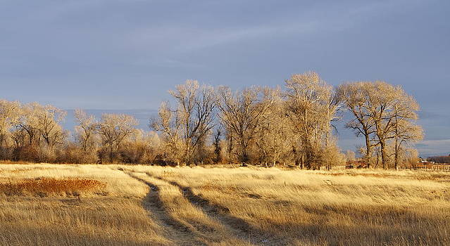 Field of Gold by Linda Jamison