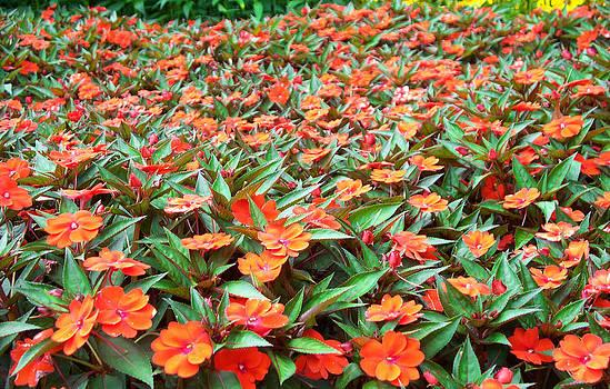 Field of Orange Flowers by Valerie Longo