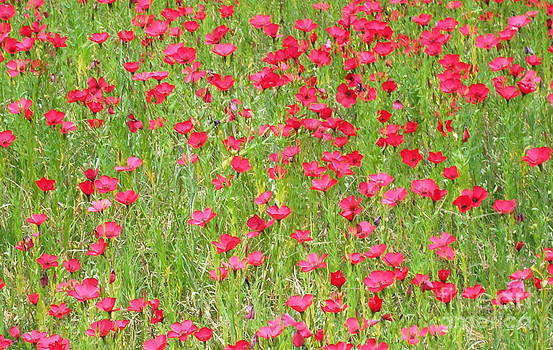 Field of Pink by Denise Hopkins