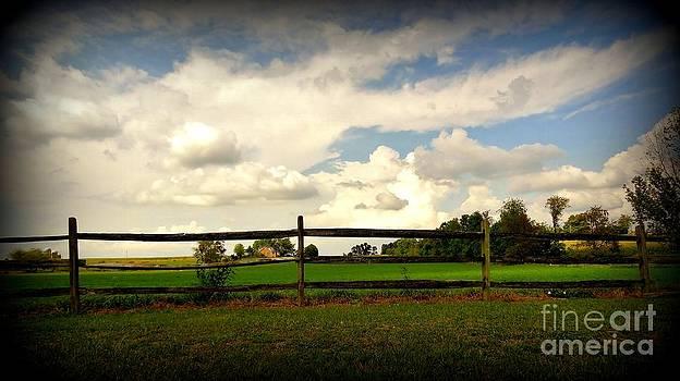 Field View by Elizabeth Hernandez