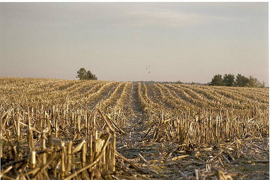 Fields of Gold by Chris Albritton