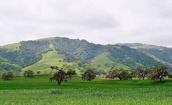 Jim Goldseth - Fields of Green